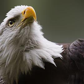 Heads Up! by John Larson - Animals Birds