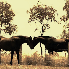 by Karen Johnson - Animals Horses