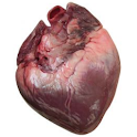 Heart Age Calculator icon