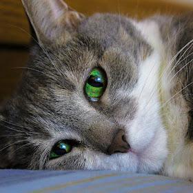 posing kitten 2.jpg