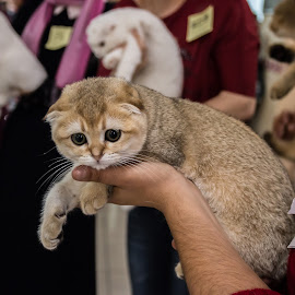 by Sveta Celik - Animals - Cats Kittens
