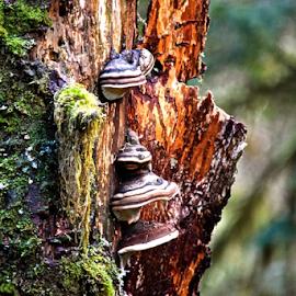Big Four Trail by Cassie Geurin - Nature Up Close Mushrooms & Fungi