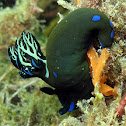 Nudibranch with egg spiral