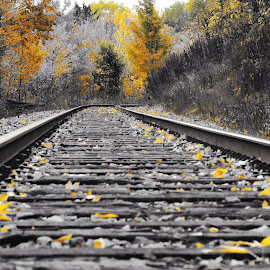Tracks  by Dan Hinde - Transportation Railway Tracks ( railroad tracks black and white fall yellow )