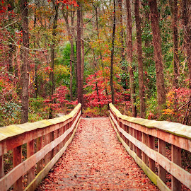 Cape Fear River Trail Boardwalk by Lou Plummer - City,  Street & Park  City Parks (  )