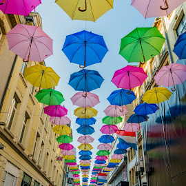 Umbrellas of Luxembourg by Ace Shooting - City,  Street & Park  Street Scenes ( umbrellas, colors, street, luxembourg )