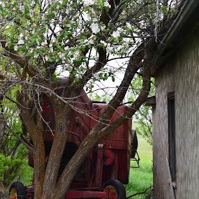 Seen It All by Selah Madland - Nature Up Close Trees & Bushes ( old, trees, house, flowers, tractor )