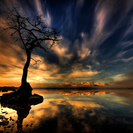 Lomond Love by Lorraine Paterson - Landscapes Sunsets & Sunrises ( love, water, clouds, hdr, tree, blue, loch lomond, reflections, long exposure, rocks, photography )