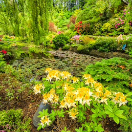 plants surround a pond at Butchard Gardens by Kathy Dee - Nature Up Close Gardens & Produce ( nature, green, outdoors, plants, trees, gardens, butchard, flowers, surround, pond, ferns, outside )