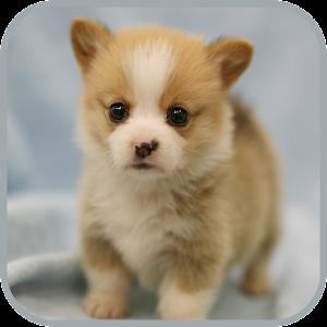 귀여운 강아지 사진 Android Apps On Google Play