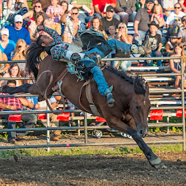 Bareback Bronc Finals by Andy Chow - Sports & Fitness Rodeo/Bull Riding ( cowboy, rodeo, hamel, bronco )