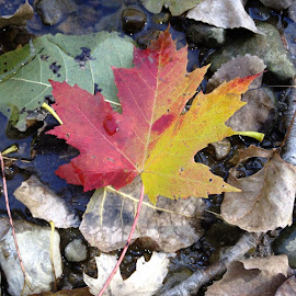 Fall into Color by Becky Schenfeld - Nature Up Close Leaves & Grasses