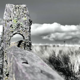 A Nantucket Fence by Janette Vohs - Landscapes Prairies, Meadows & Fields (  )