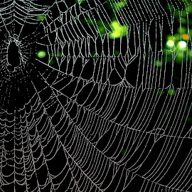 Oh what tangled webs we weave........ by Paul Mays - Nature Up Close Webs