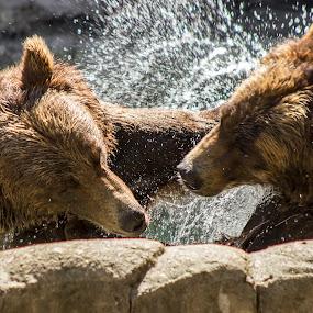 by Jarrod Kudzia - Animals Other Mammals (  )
