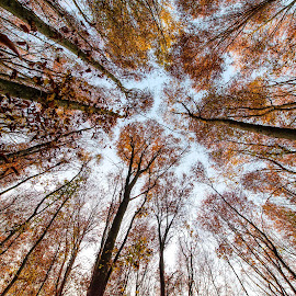 Forest by Snjezana Pongrac - Nature Up Close Trees & Bushes ( orange, leafs, nature, green, nature up close, trees, forest, yellow,  )