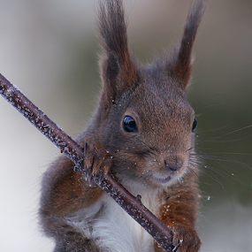 Squirrel by Allan Wallberg - Animals Other ( , Backyard, insects, reptiles, living creatures, green, colors, daily life )