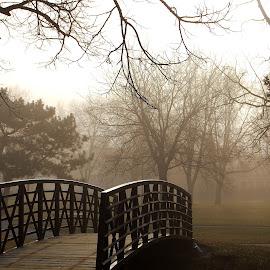 Morning fog. by Erin Czech - City,  Street & Park  City Parks ( park, south park, fog, trees, bridge,  )
