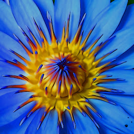 flower by Asif Bora - Digital Art Things