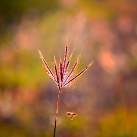 by Nani Garu - Nature Up Close Leaves & Grasses
