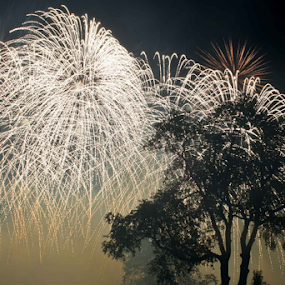 4th Fest, State College, Pennsylvania by Michael Sharp - Landscapes Prairies, Meadows & Fields ( tree, fourth of july, fireworks, night, 4th fest )
