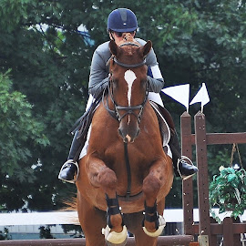 by Lisa Dean - Animals Horses ( concentration, jumping, horses, sports, fun, gelding )