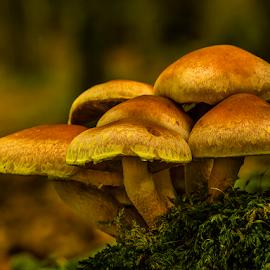 Fungi Group by Peter Samuelsson - Nature Up Close Mushrooms & Fungi