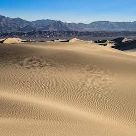 Mesquite Sand Dunes, Death Valley, California by Paul Brady - Landscapes Deserts ( death valley, contrast, mountains, dunes, dry, desert, california, mesquite dunes, landscape )