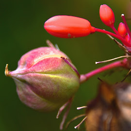 by Steven Aicinena - Nature Up Close Other plants