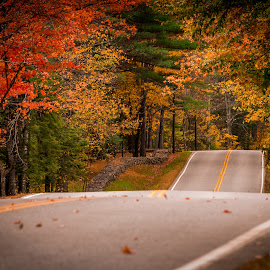 Tunneling through Autumn by Richard Thrasher - Landscapes Travel ( tree, highway, color, autumn, fall, trees, road, leaves, new hampshire )