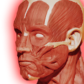 Free Muscular System 3D (anatomy) APK for Windows 8