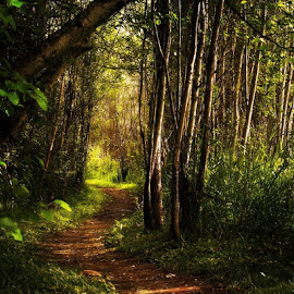 by Rob Hansen - Landscapes Forests ( path, nature, landscape )