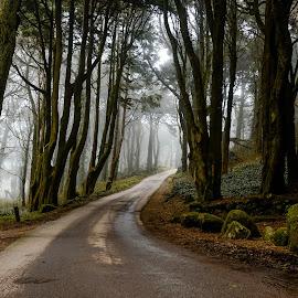 by Pedro Da Costa - Landscapes Forests