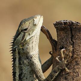 by Saefull Regina - Animals Amphibians