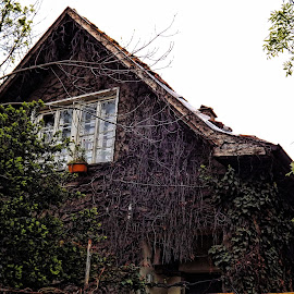 Vine House by Ines Raycheva - Buildings & Architecture Homes ( plant, building, green, plants, house, leaf, growing, ivy, leaves, pot, roof, vine house, window, grow, branch, branches, sofia, bulgaria )