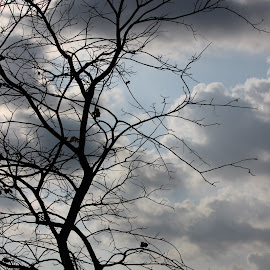 Dark & Heavy, Yet so Lovely by Kannan Manoharan - Nature Up Close Trees & Bushes ( withered tree, tree, dark clouds, tree branches )