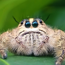 Waiting by Dhani Prasetya Yudhistira - Instagram & Mobile Other ( macro, jumping spider, spider, insect )