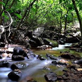 The milky stream by Varun Vijay - Nature Up Close Water ( water, nature up close, forest, streams )