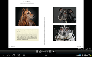 Screenshot of The Bark: dog culture magazine