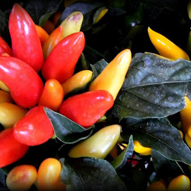 Salsa time! by Liz Hahn - Nature Up Close Gardens & Produce