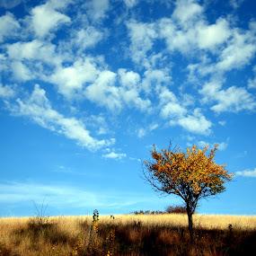 by Viorel Vaida - Landscapes Prairies, Meadows & Fields