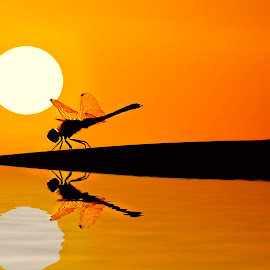 Monster Dragon by Alne Anthony Rufo - Digital Art Animals ( reflection, dragon fly, sunset, dramatic, sunshine, sun )