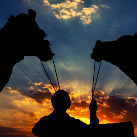 Sunbeams and Silhouettes by Ajay Sood - Animals Other Mammals ( clouds, camel master, orange, sun set, sunbeams, colors, rajasthan, camels, colours, camel, cattle fair, pushkar, ajmer, blue, sunset, asia, india, evening )