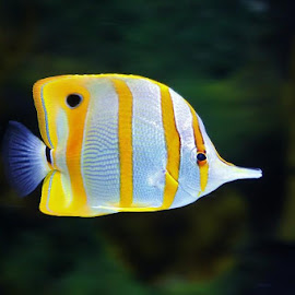 by Debbie Slocum Lockwood - Animals Fish (  )