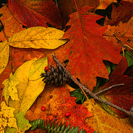 Autumn Remnants III by Michael Buffington - Nature Up Close Leaves & Grasses ( red, autumn, leaves )