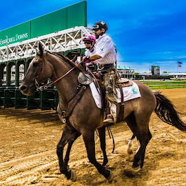 Derby Dreams by Joe Ashcraft - Animals Horses ( horseback, horses, horse )