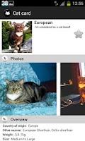 Screenshot of My Cats Breeds Premium