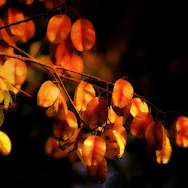 Raintree Pods. by Dave  Horne - Nature Up Close Trees & Bushes
