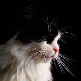 *** by Jurijs Ratanins - Instagram & Mobile Android ( mobilography, cat, pet, portrait, animal )