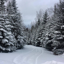 snowmobile trail grand Marais mn by Sierra Parsons - Landscapes Forests (  )